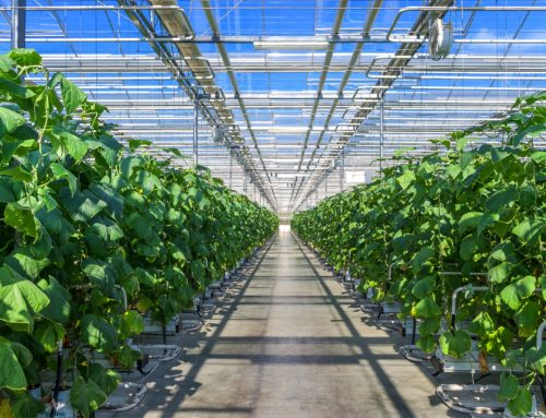 AgTech Software Solutions Aren't One-Size-Fits-All