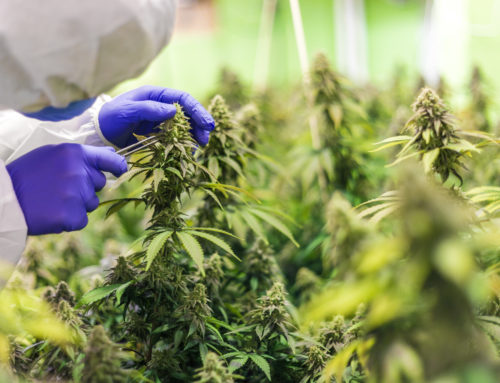 3 Tips For Keeping Your Cannabis Operation Compliant